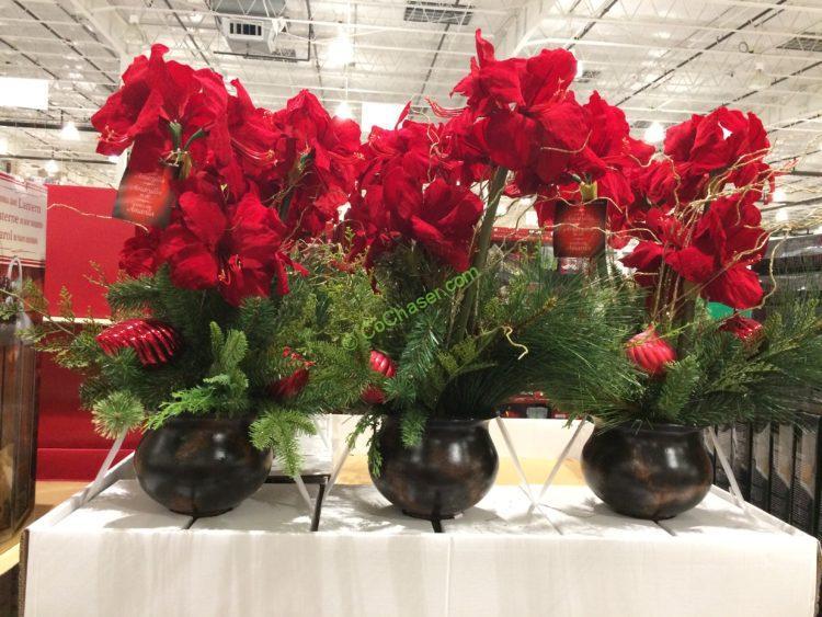 Holiday decor page 3 costcochaser for Amaryllis christmas decoration